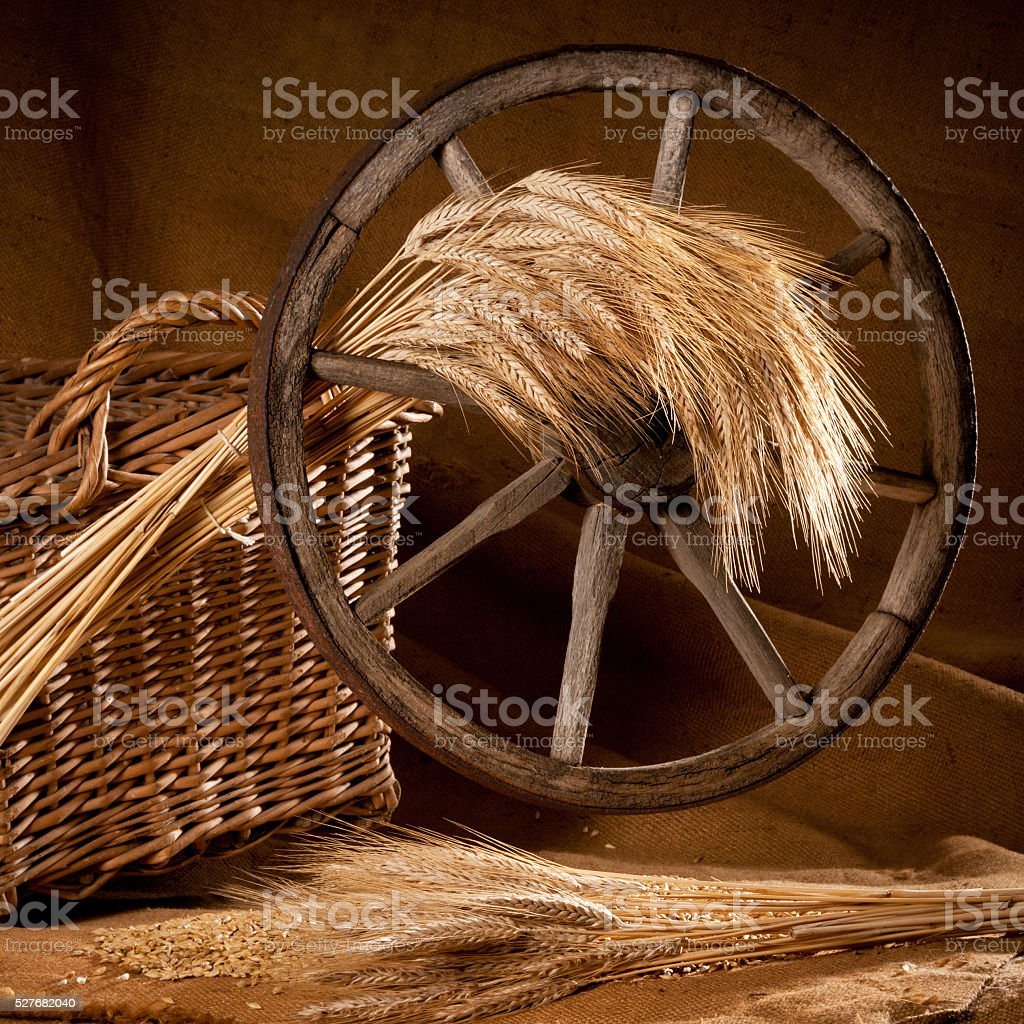 vintage still life with barley and old wheel stock photo