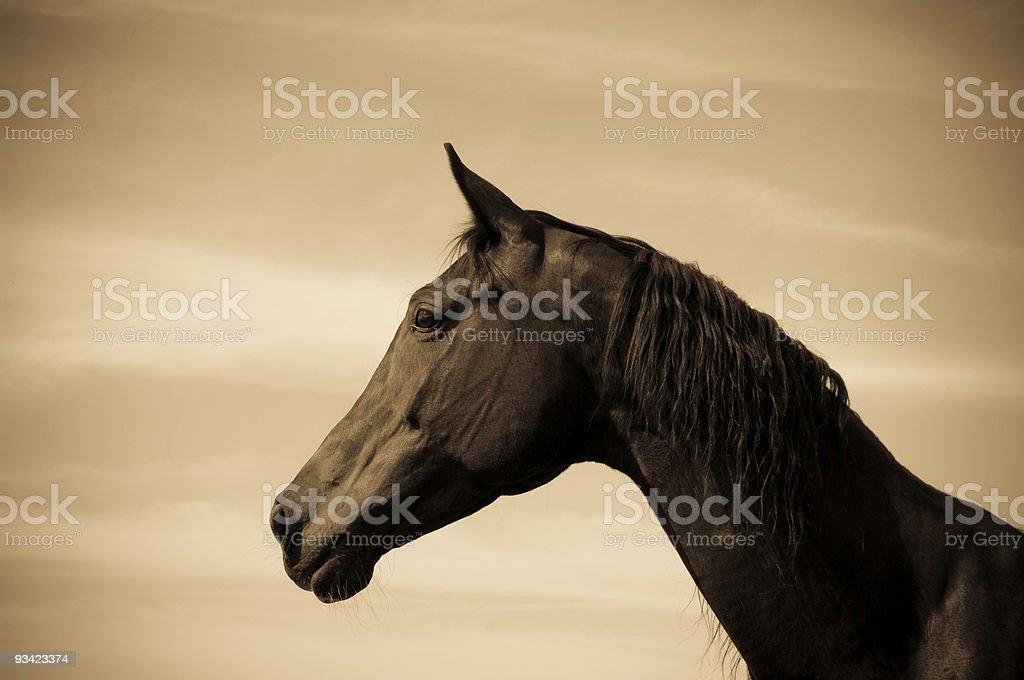 Vintage Style Horse Portrait royalty-free stock photo