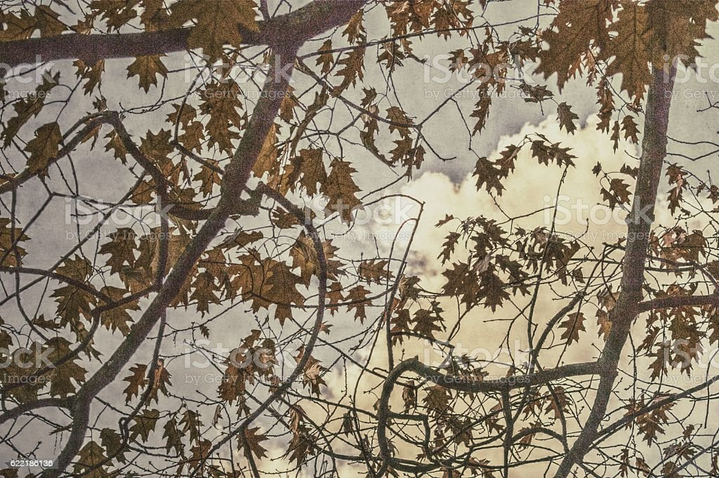 Vintage Style Photograph Of Autumn Leaves stock photo
