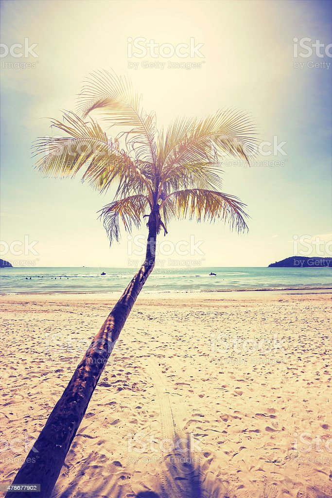 Vintage stylized tropical beach with palm tree at sunset. stock photo