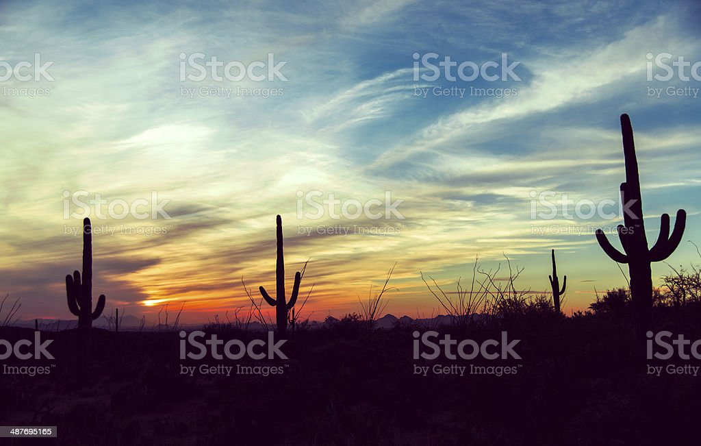 Vintage sunset at Saguaro National Park, Arizona stock photo
