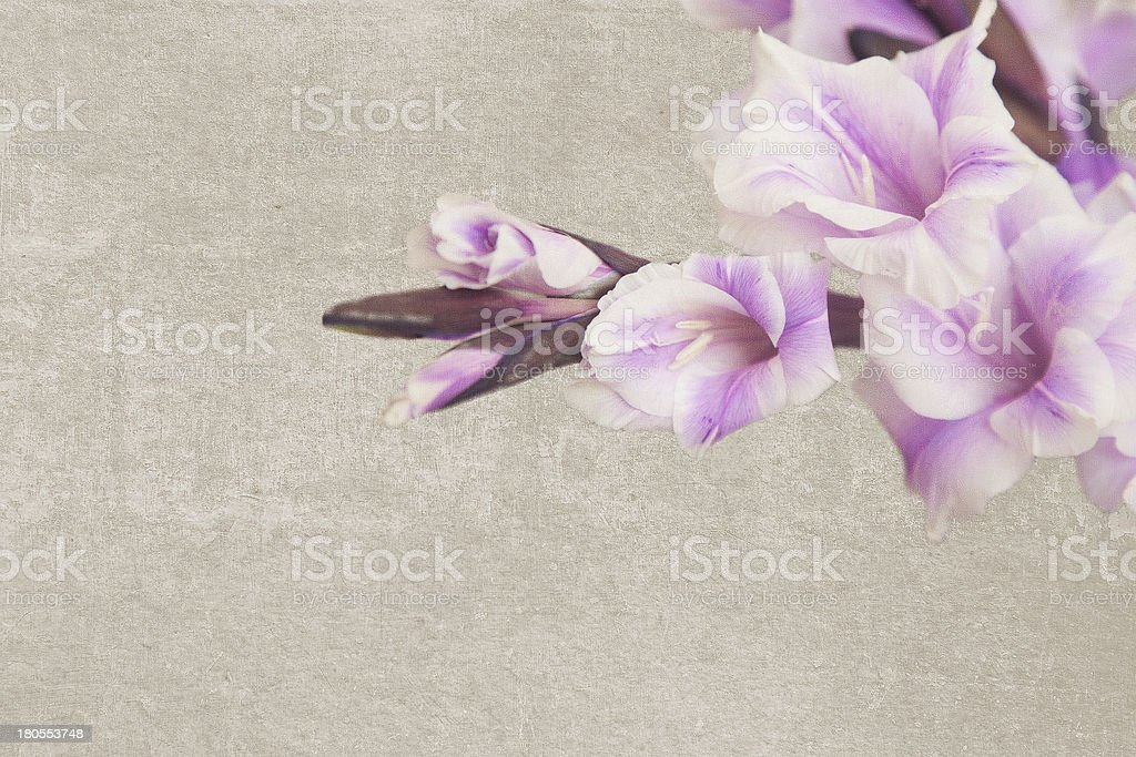 Vintage texture with lilac gladiole stock photo