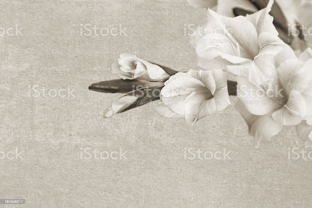 Vintage texture with sword lily branch stock photo