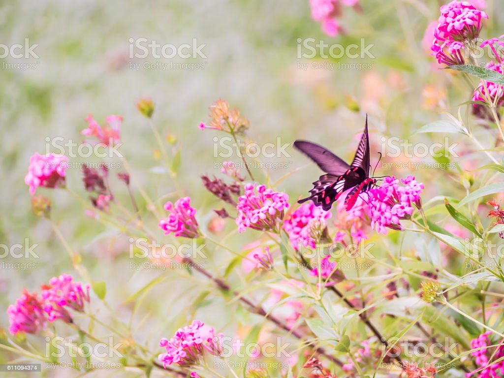 Vintage tone of focus at butterfly with abstract blurry flowers stock photo