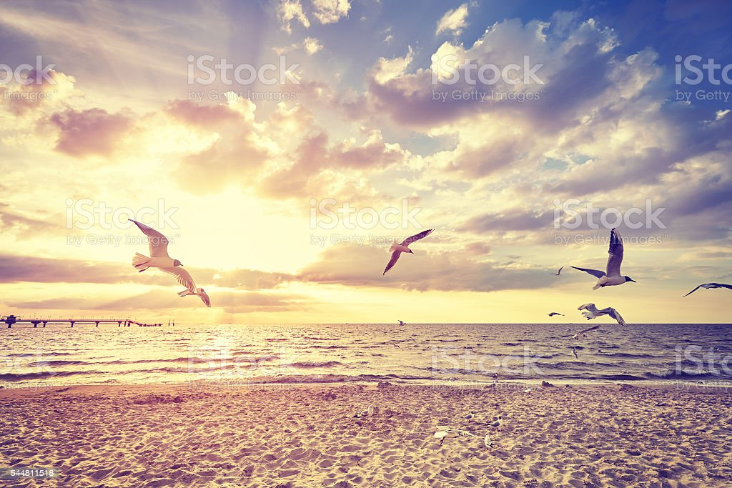 Vintage toned beach with flying birds at sunset stock photo