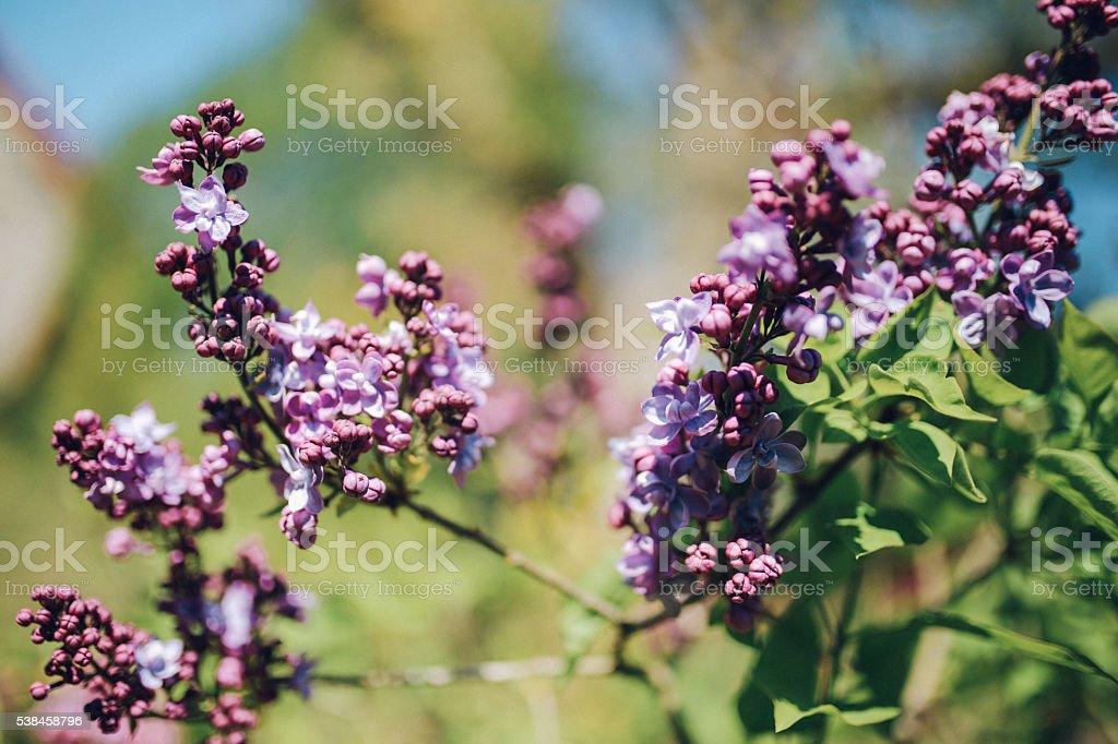 Vintage toned flowers closeup stock photo
