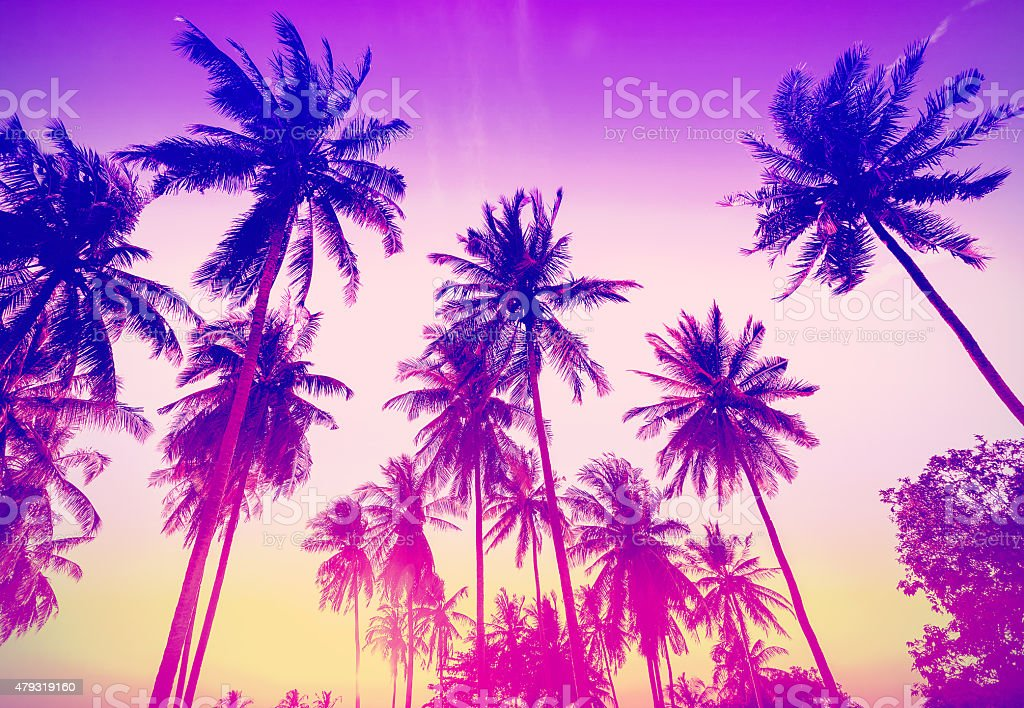Vintage toned palm trees silhouettes at sunset. stock photo