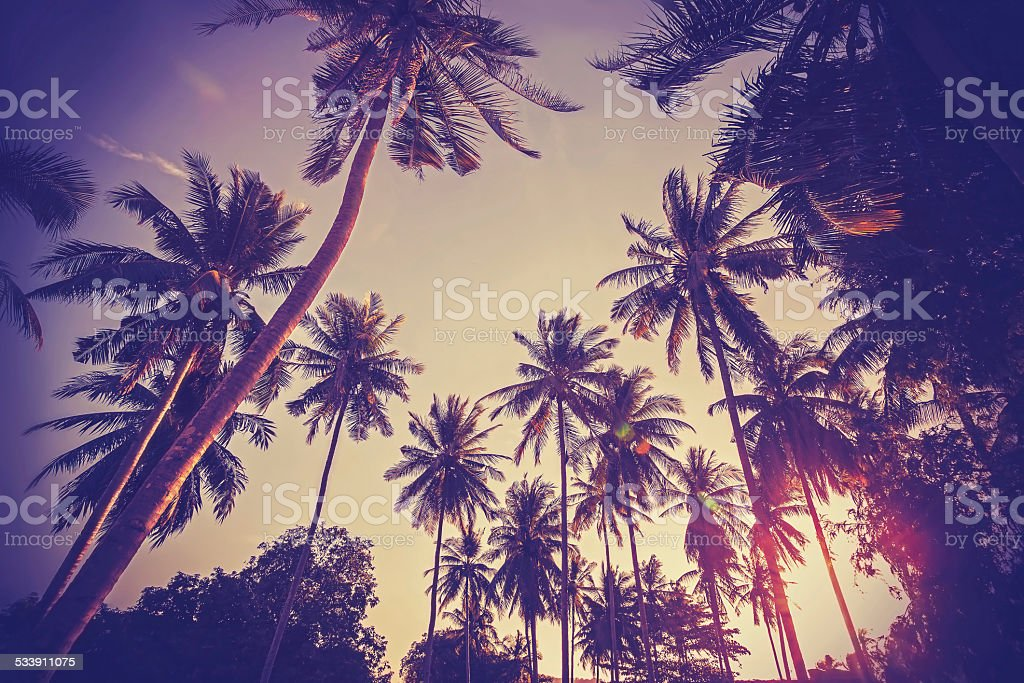 Vintage toned picture of palms silhouettes against sunrise. stock photo
