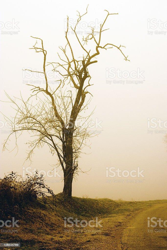 vintage tree royalty-free stock photo