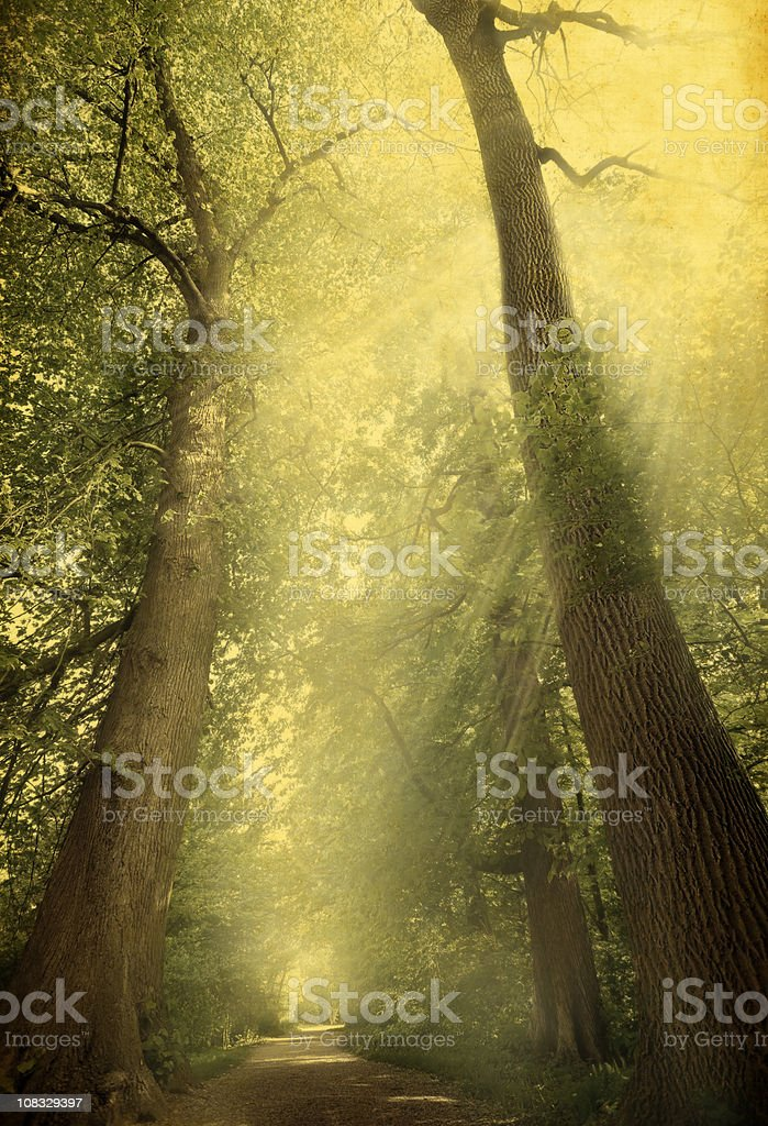 Vintage Trees In Forest – Toned Image royalty-free stock photo