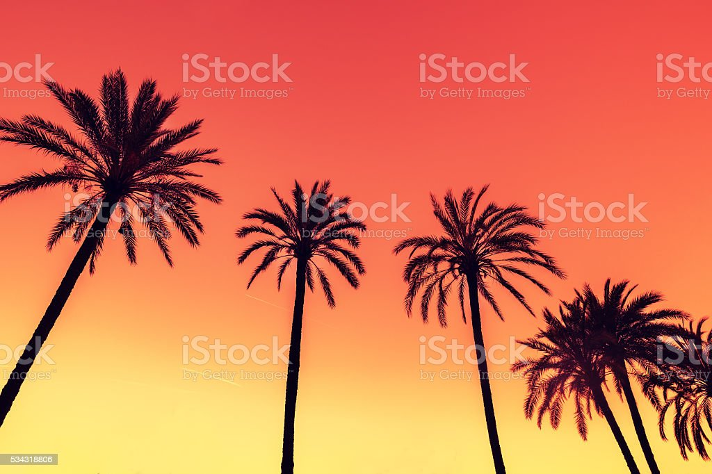 Vintage tropic palm trees against sky at sunset light stock photo