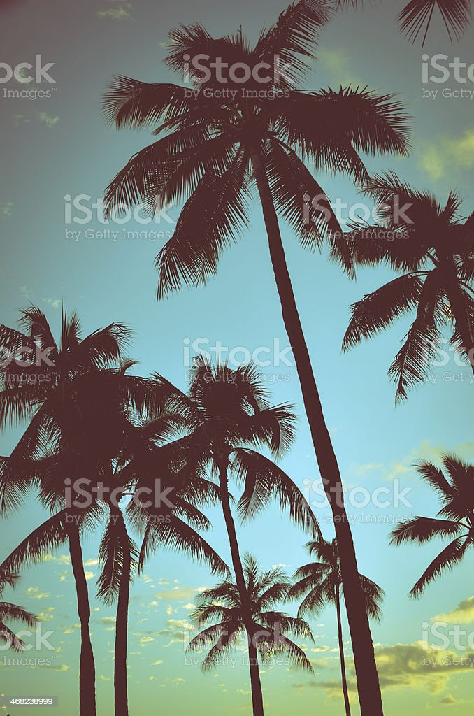 Vintage Tropical Palms stock photo