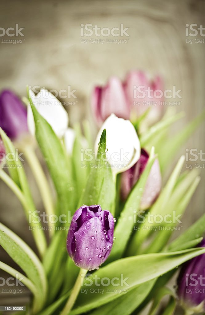Vintage Tulips royalty-free stock photo