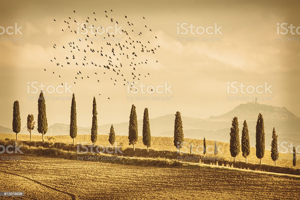 Vintage Tuscany Landscape of cypresses trees and birds stock photo