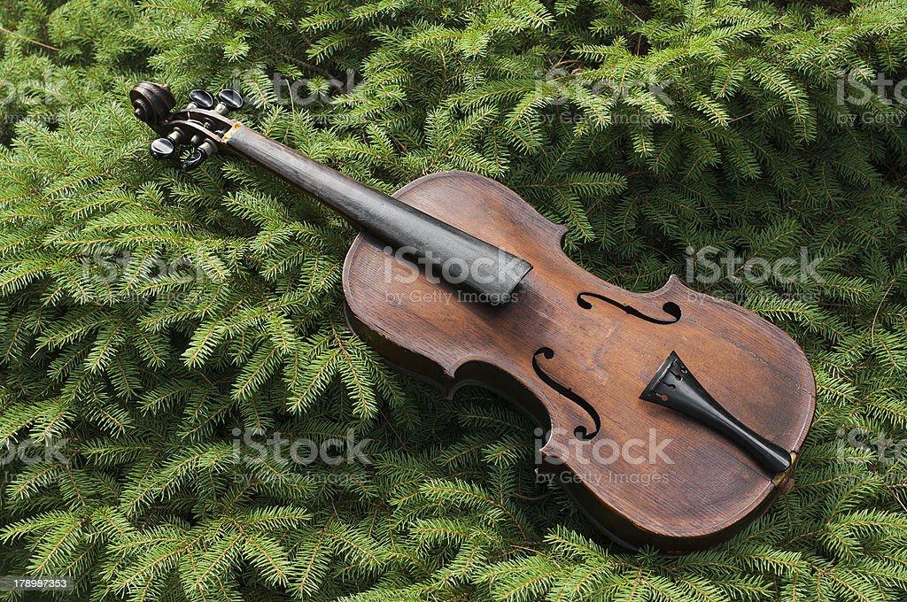 Vintage violino na Pine Tree foto royalty-free