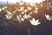 vintage wild flower