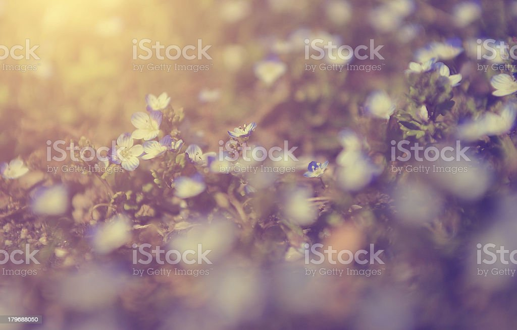 Vintage wild flowers royalty-free stock photo