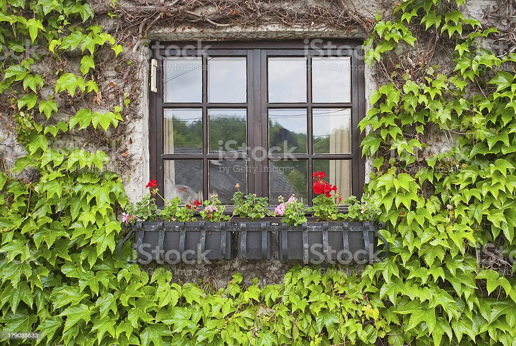 Vintage window with flowers royalty-free stock photo