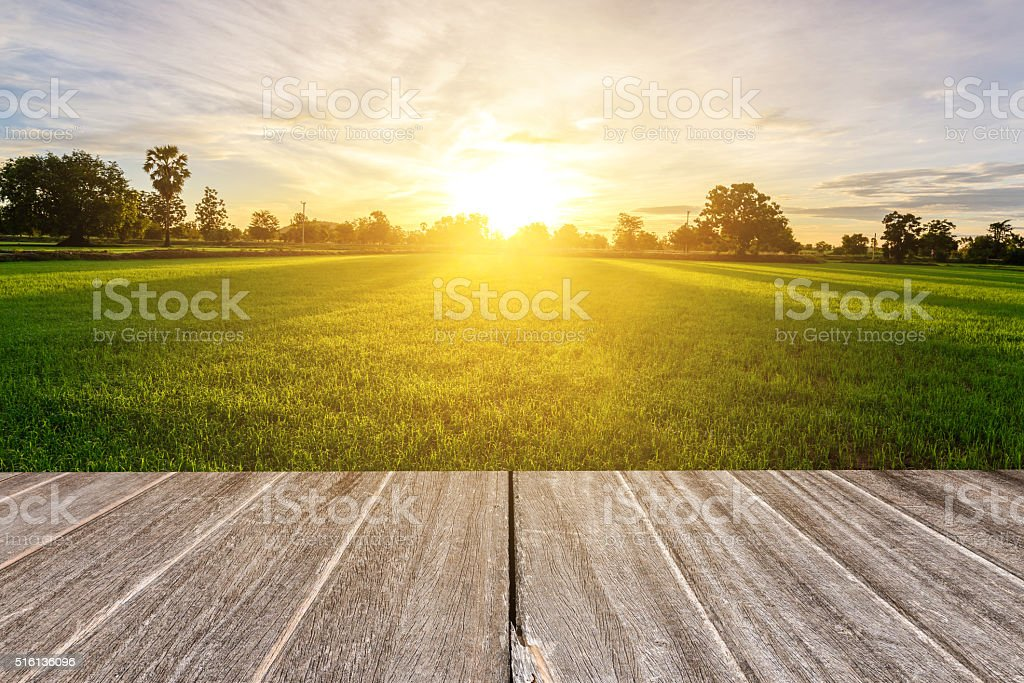 Vintage wooden texture with rice field in the morning. stock photo