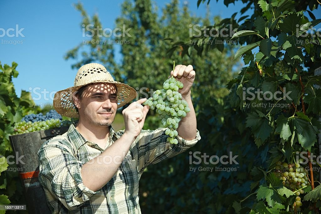 Vintager wearing butt full of grapes stock photo