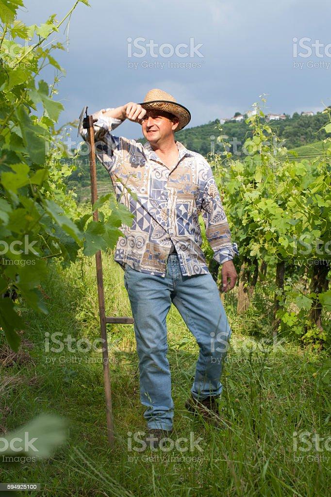 Vinter at his Vineyards stock photo