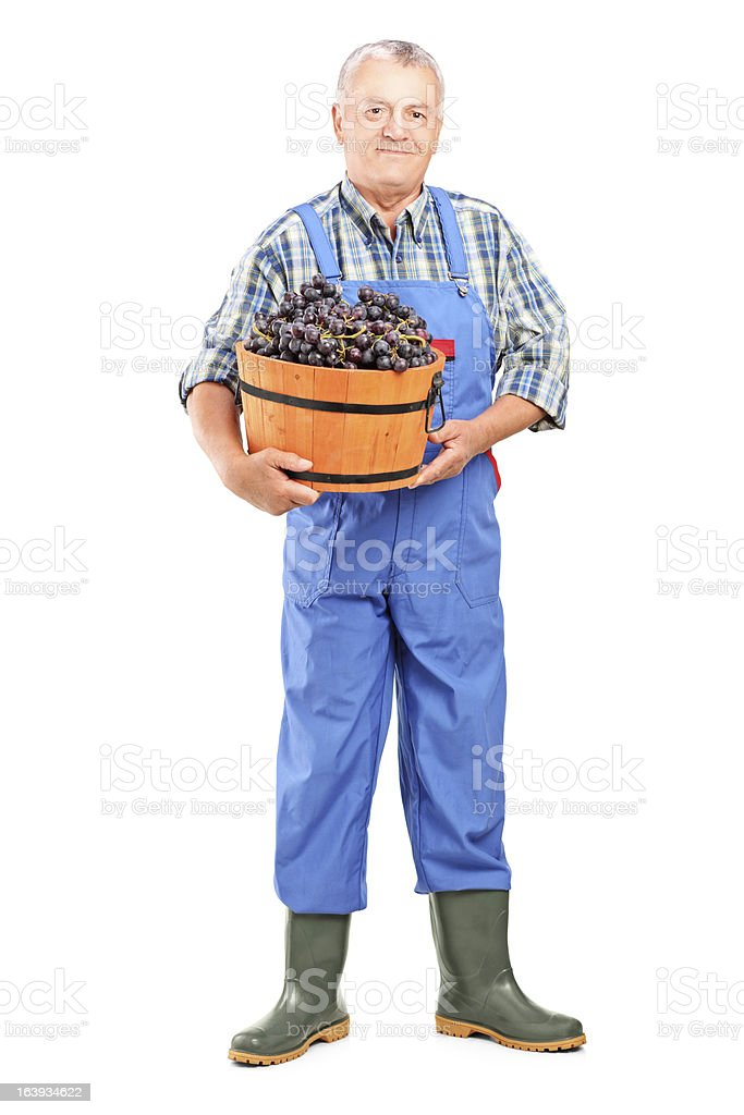 Vintner holding a bucket of grapes stock photo