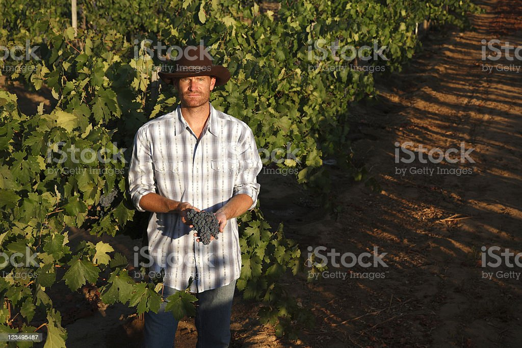 Vintner holding grapes royalty-free stock photo