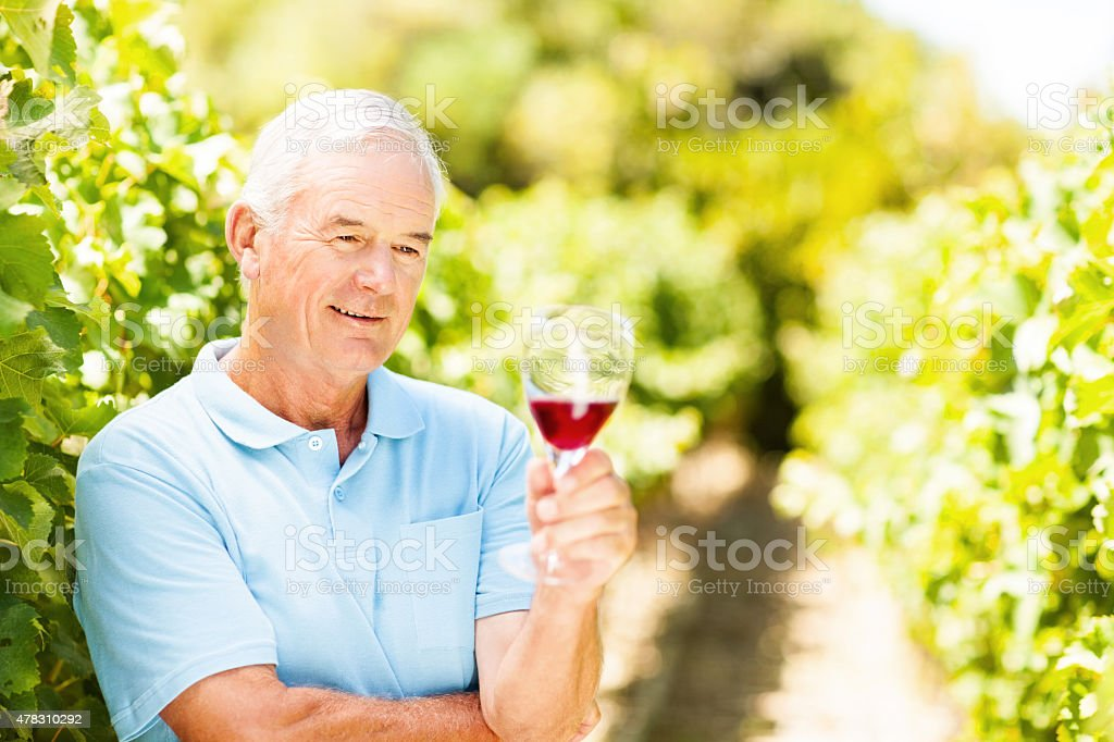 Vintner Looking At Red Wine Glass In Vineyard stock photo