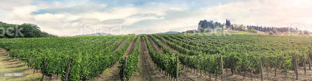 Vinyard in Tuscany stock photo