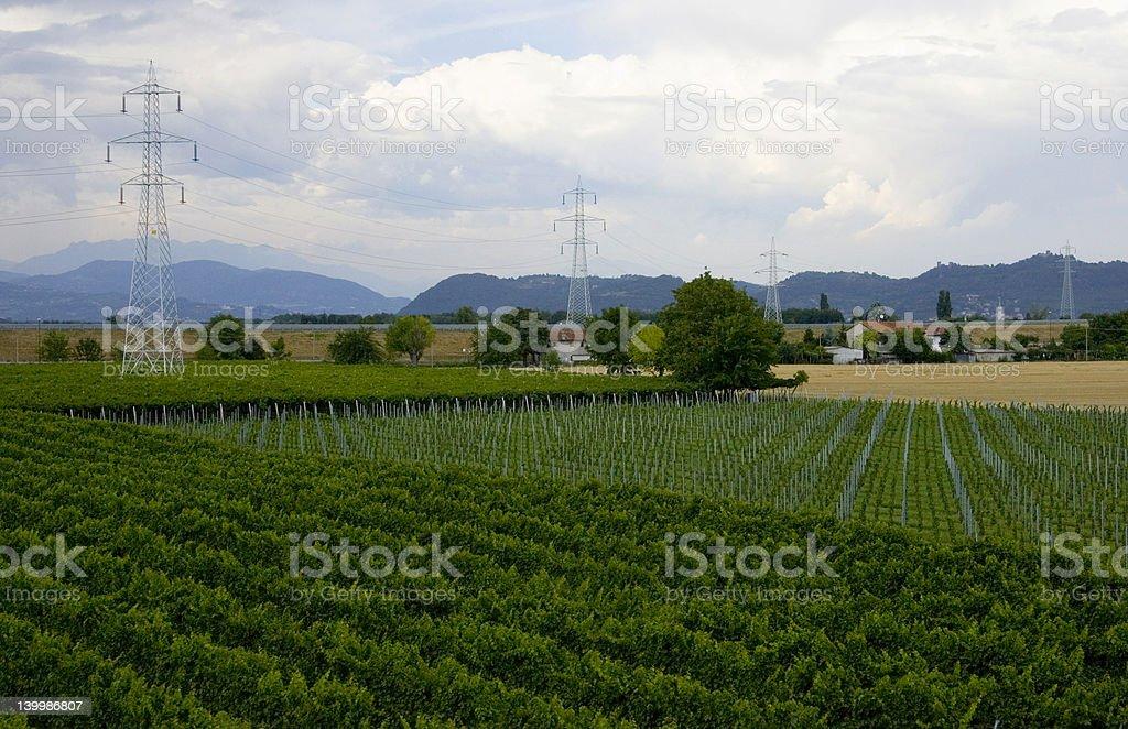 Vinyard with electircal towers stock photo