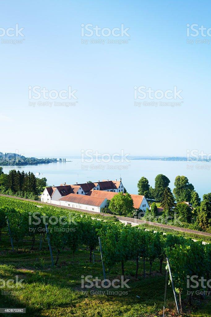 Vinyards and tracks along lake Bodensee stock photo