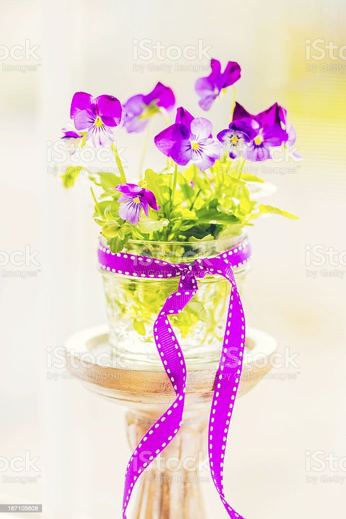 Viola Bouquet in Window royalty-free stock photo