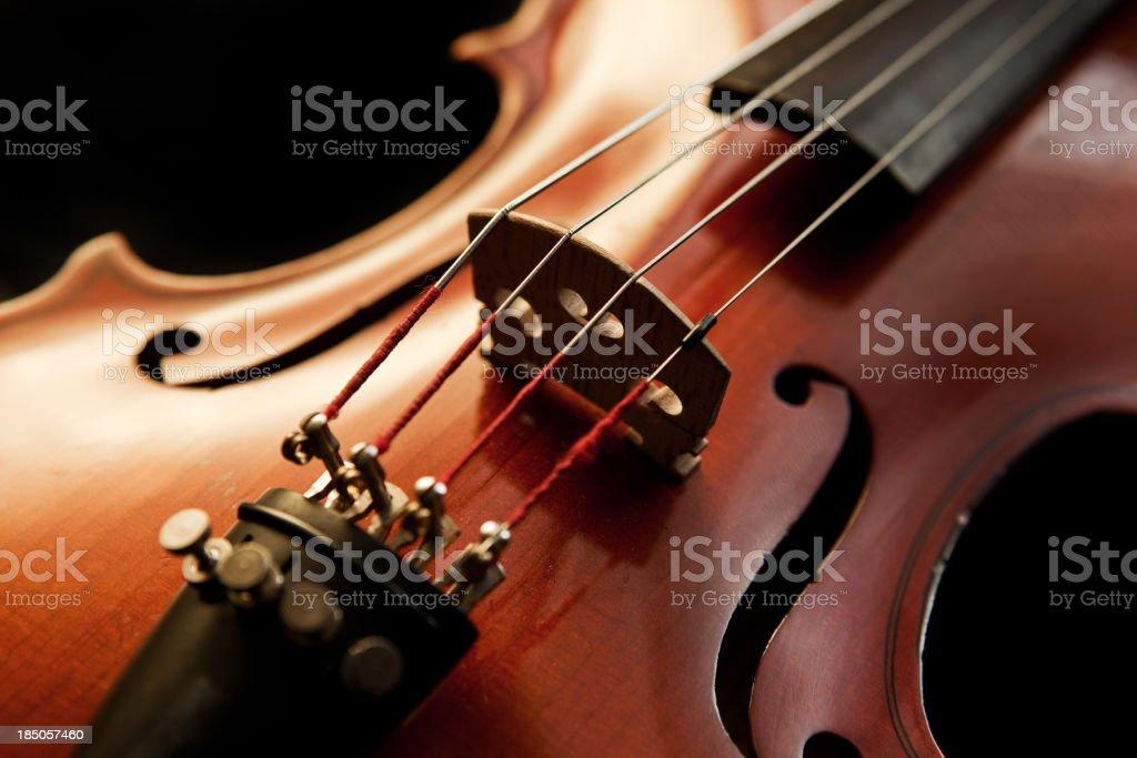 Viola stock photo