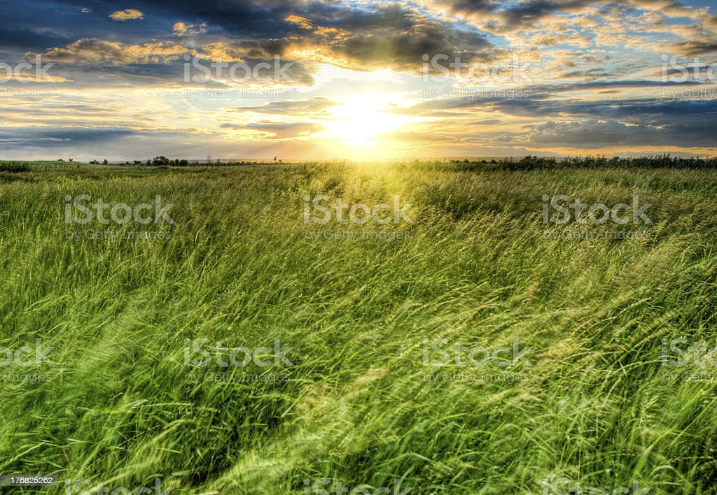 violent strom on field royalty-free stock photo