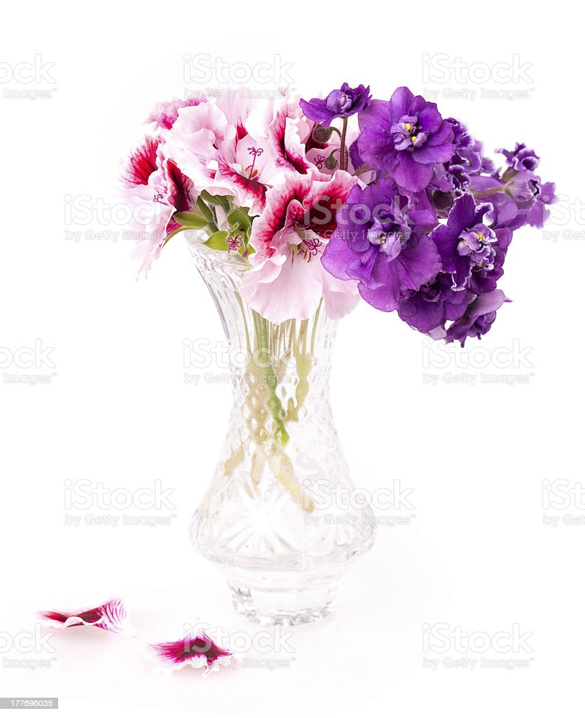 violet and geranium flowers royalty-free stock photo