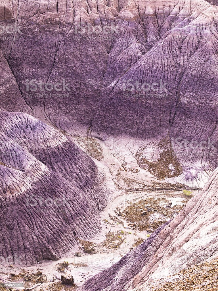 Violet country stock photo