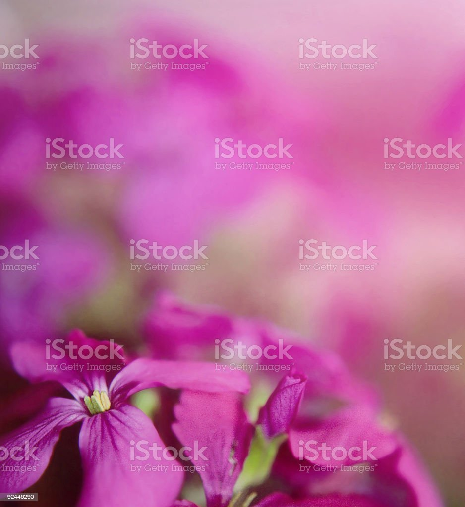 Violet depth royalty-free stock photo