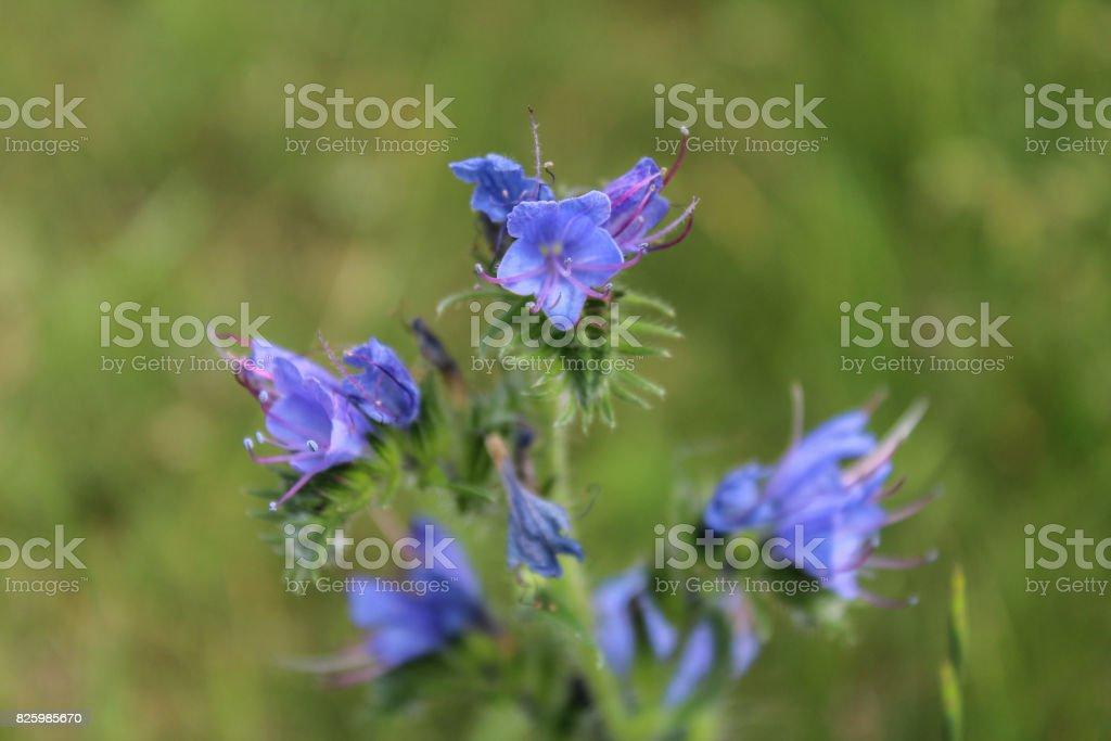 Violet flower on green background, macro photo stock photo