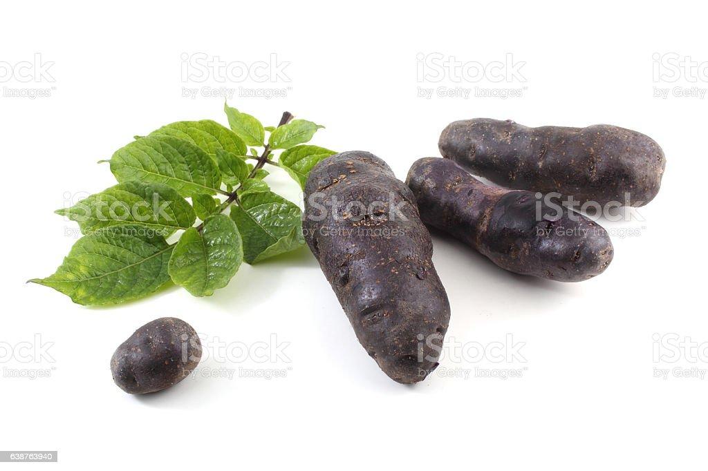 Violet French potato 'Vitelotte' stock photo