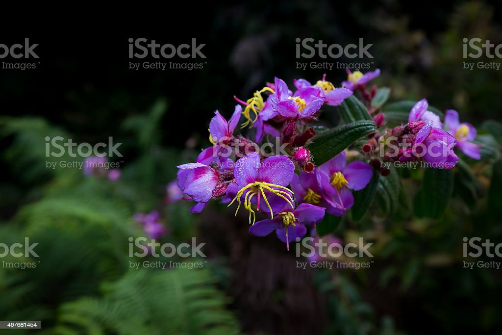 Violet orchid flower. stock photo