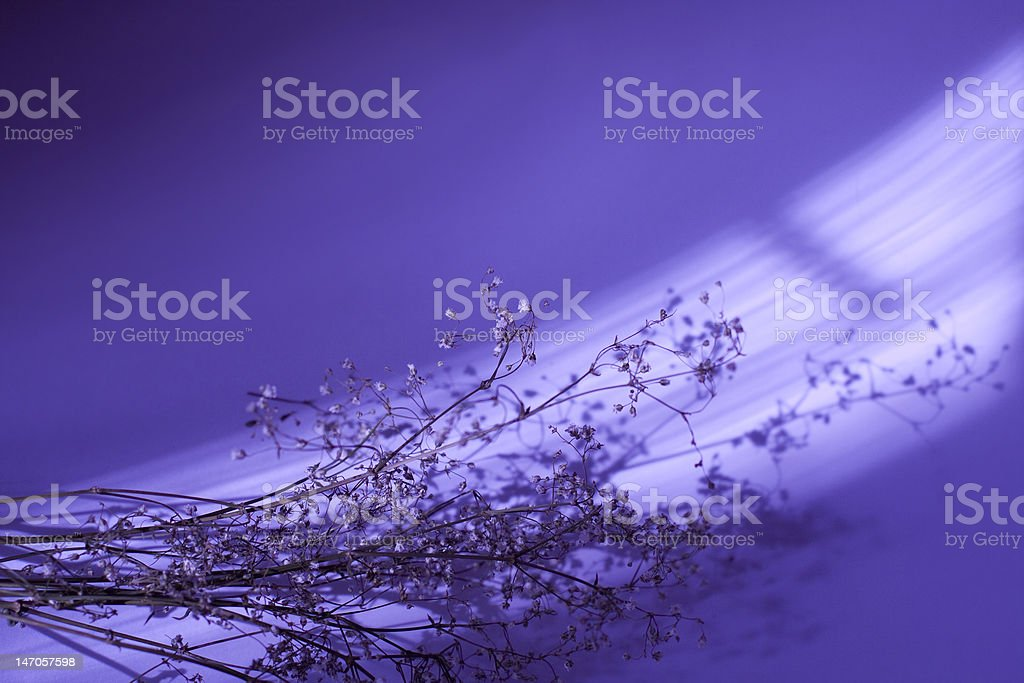 Violet sprigs royalty-free stock photo