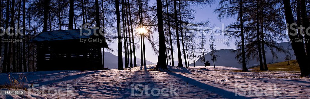 Violet warm winter sun through trees with shadow stock photo
