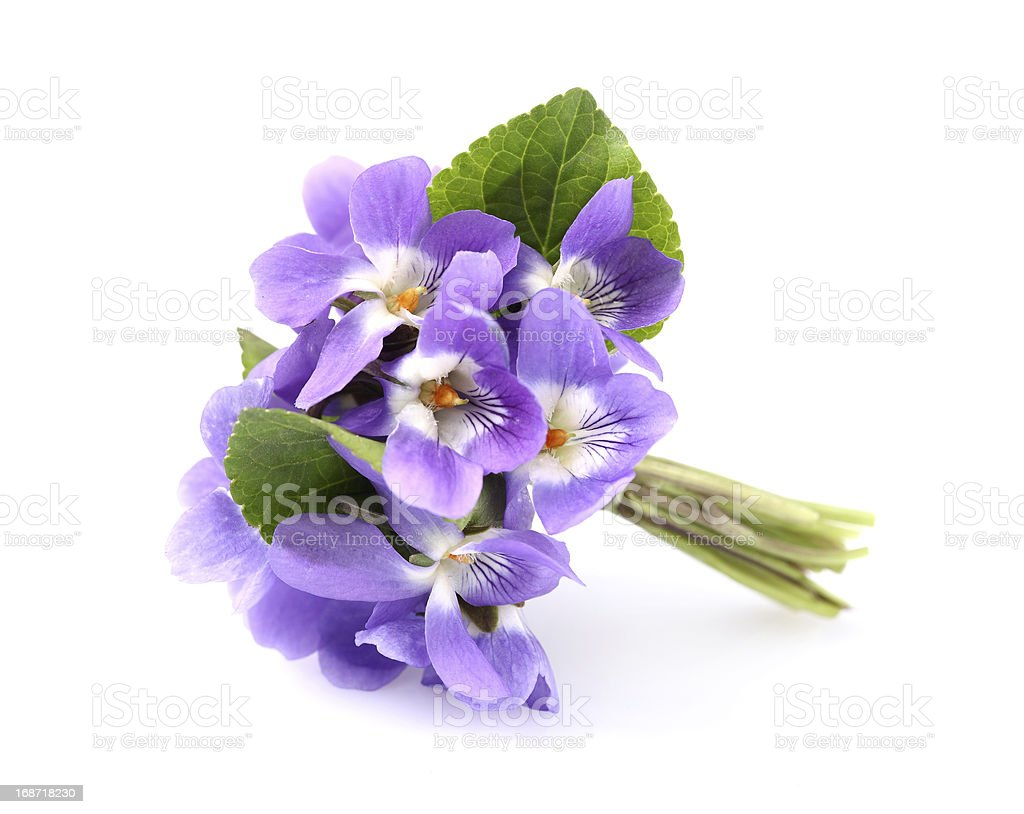 Violets wildflowers royalty-free stock photo