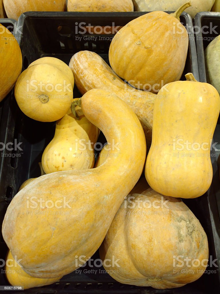 Violin Pumpkins stock photo