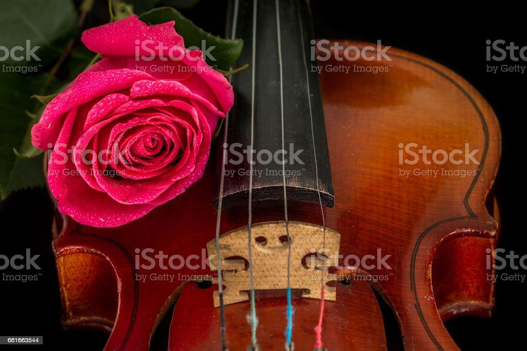 Violin sheet music and rose. stock photo