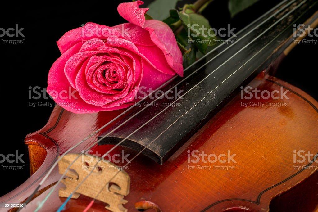 Violin sheet music and rose stock photo