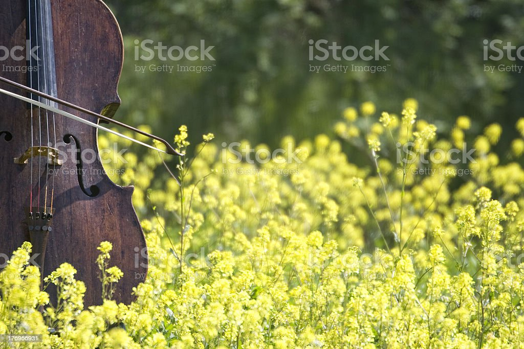 Violoncello spring stock photo