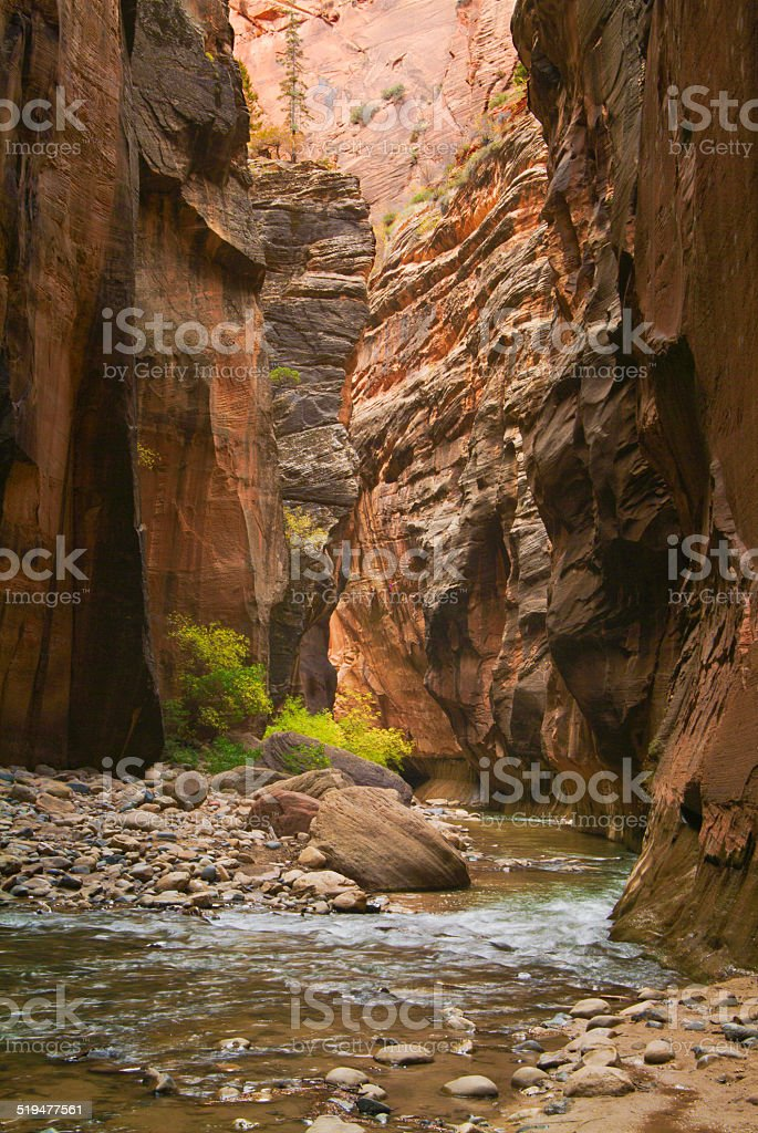 Virgin River, The Narrows-Zion National Park, UTAH,USA stock photo