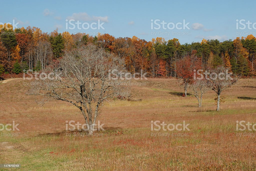 Autumn leaves adorn the hardwoods growing at a field\'s edge on the...