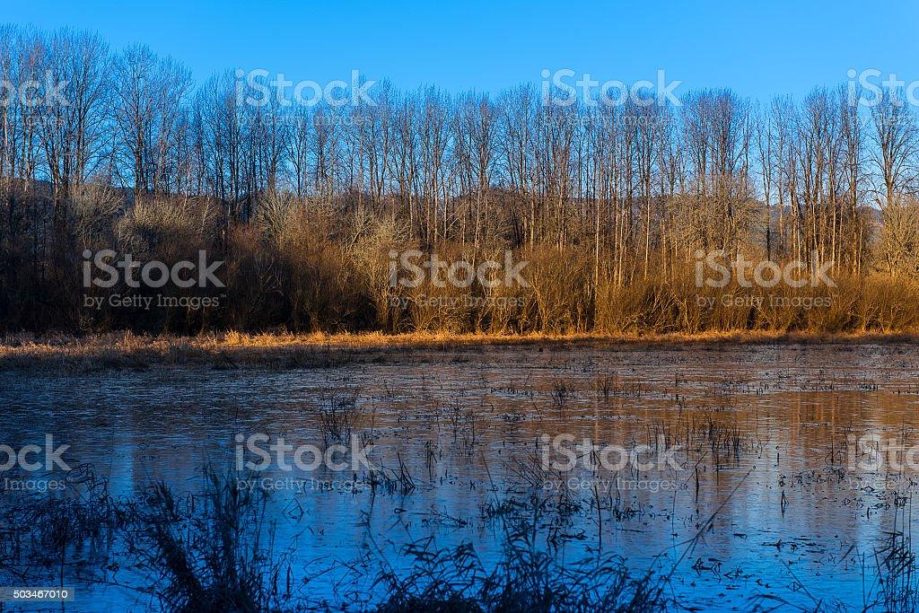Virginia Lake, Sauvie Island Oregon stock photo